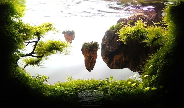 Floating Plants Betta Tank