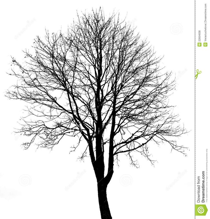 Bare Tree Coloring Pages Realistic