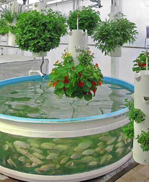 Tilapia Fish Pond Design