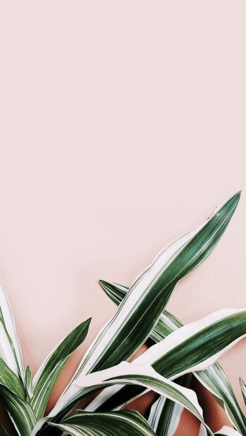 Pineapple Backrounds Pink And White