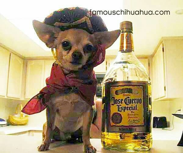 Chihuahua Hat Sombrero