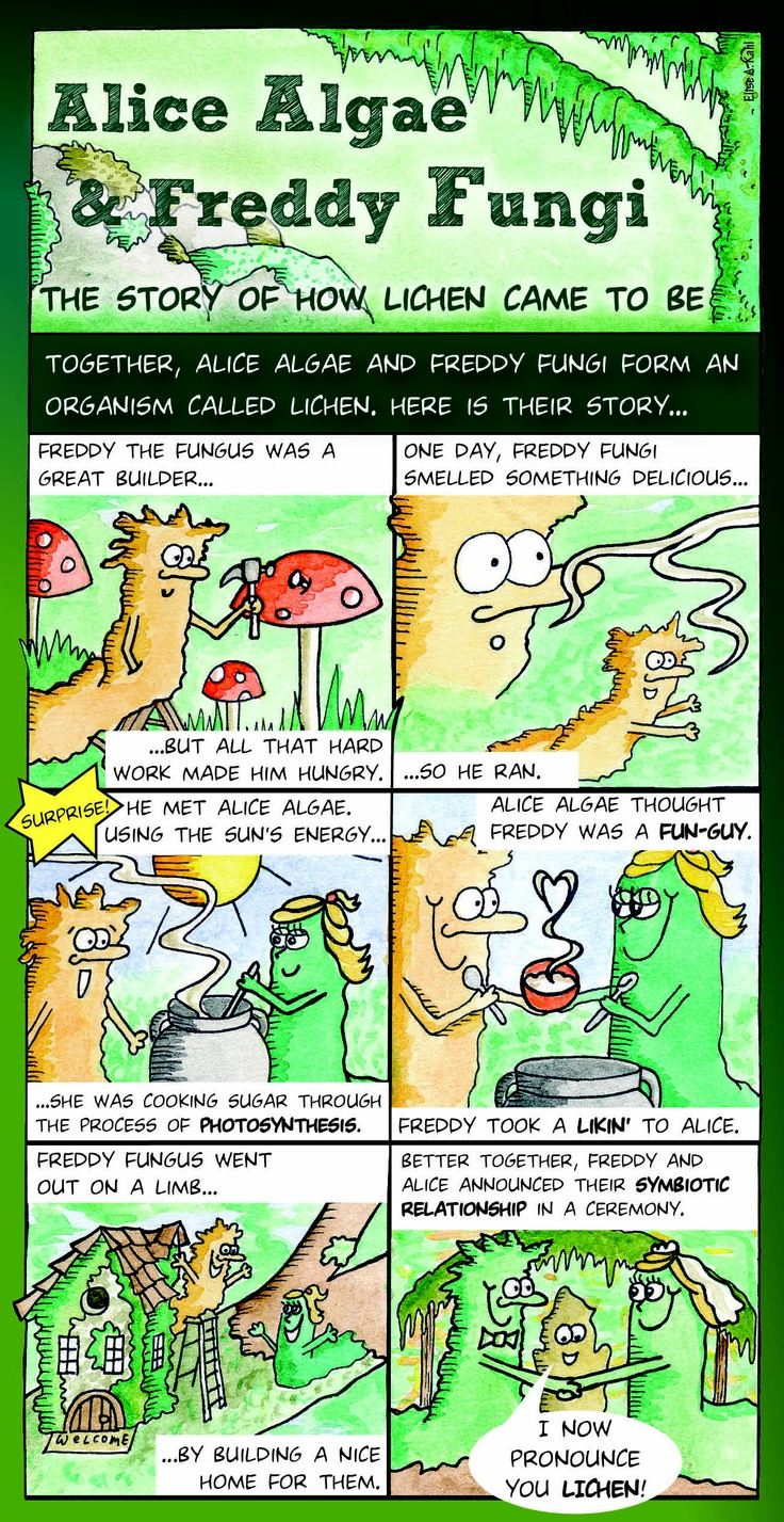 What Is Lichen Here Is A Fun Cartoon That Tells The Story