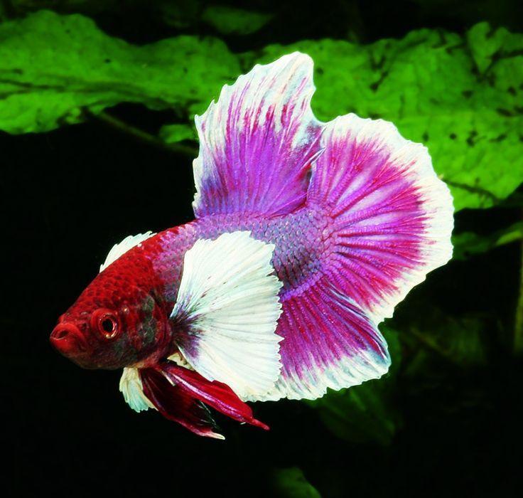 Aquarium Cave Diy Betta