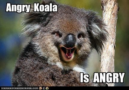 angry wet koala bear - Movie Search Engine at Search.com