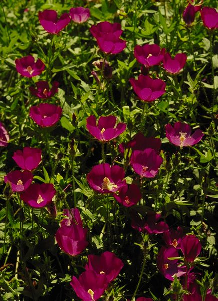 Flowers Grow Florida