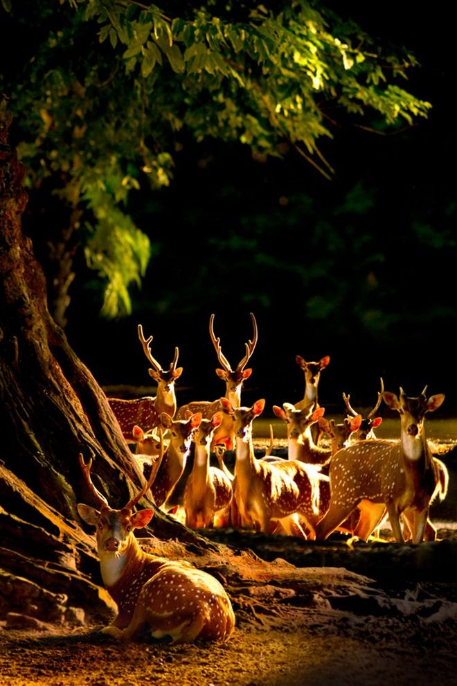 Food Between Deer Time Lion Deer Because Runs Wins Many Lion Deer And Life 7
