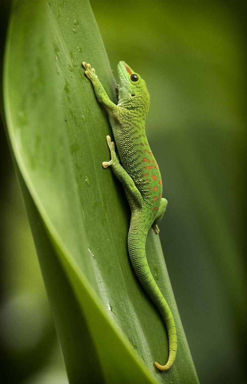 764 Best Amazing Reptiles Images On Pinterest