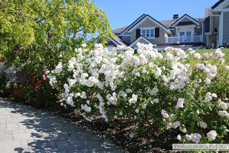 Flower Bed Edging Landscape