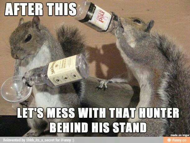 Squirrels Hunting Games