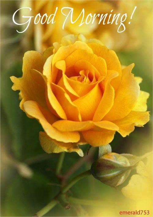Imagenes De Rosas Animadas Con Movimiento Y Brillo