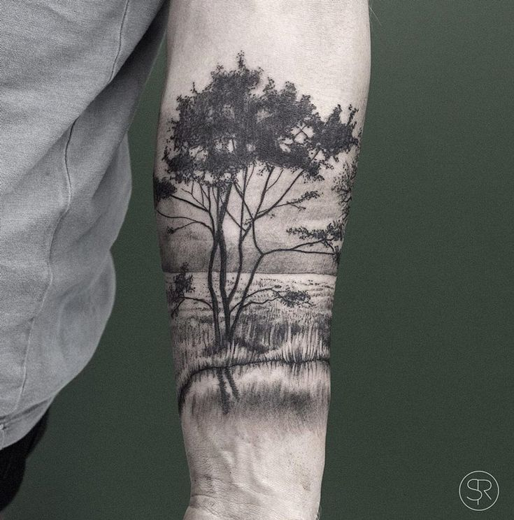 150 Best Images About On Pinterest Trees A Tree And The