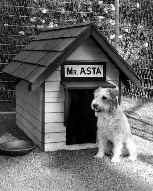 Nick And Noras Dog Asta