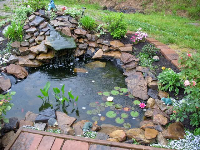 Outdoor Goldfish Pond Ideas