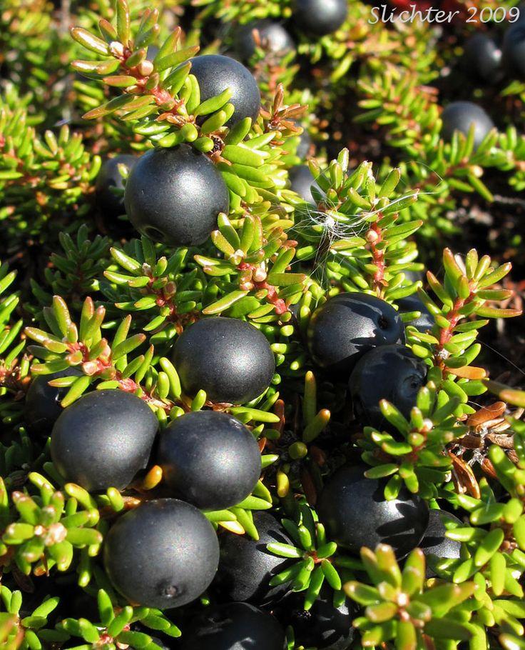 Irish Strawberry Tree Fruit Recipes