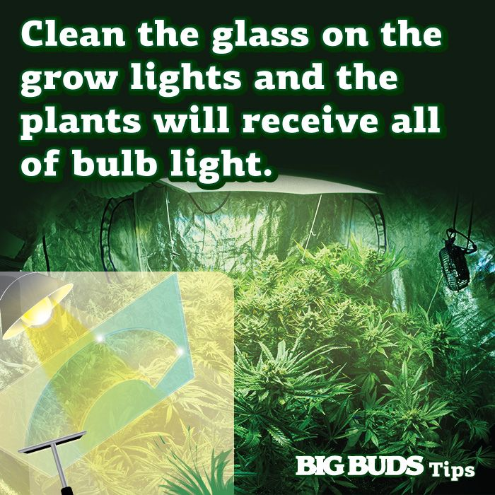 Best Light Bulb Growing Weed