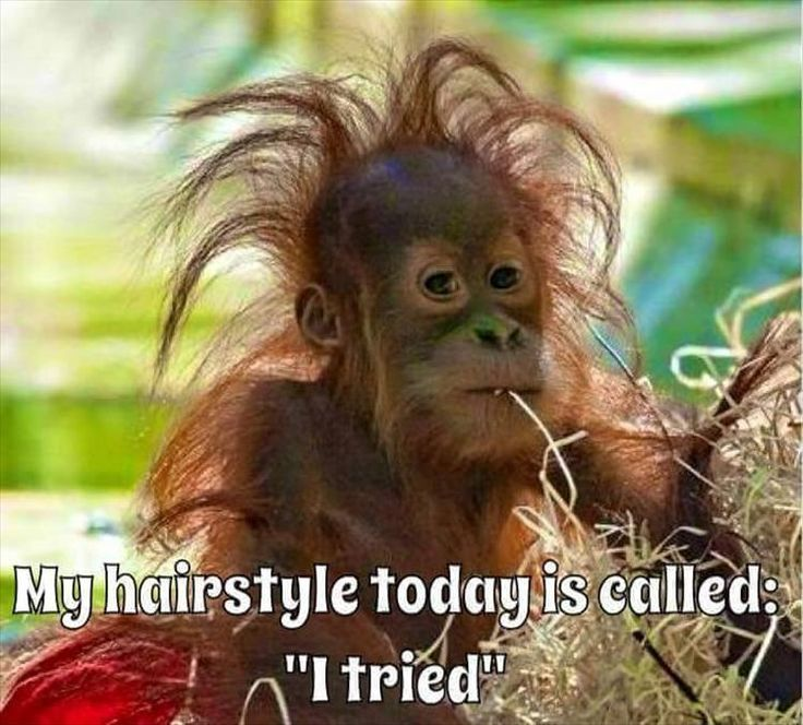 Funny Tired Animal Quotes