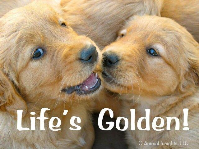 Quotes Funny Golden Retriever