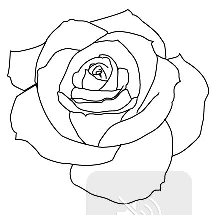 Realistic Rose Tattoo Outline Pictures | tattoos ...
