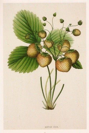 Botanical Prints Framed Reproductions