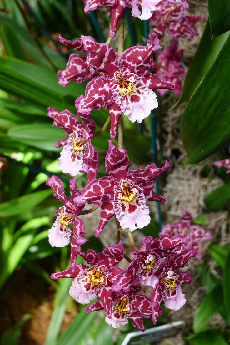 Purple Hibiscus Silk Flowers