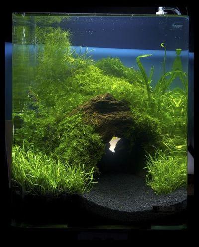 aquarium and fish | For the Home | Pinterest | Aquascaping ...