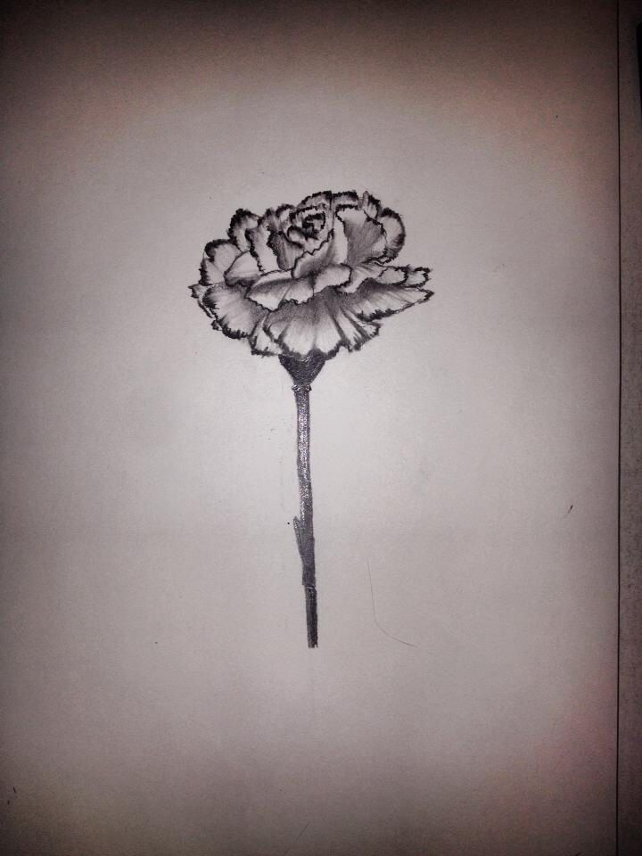 Grey And Black Carnation Tattoos