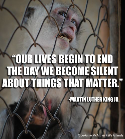 King Animals Quote Luther About Martin