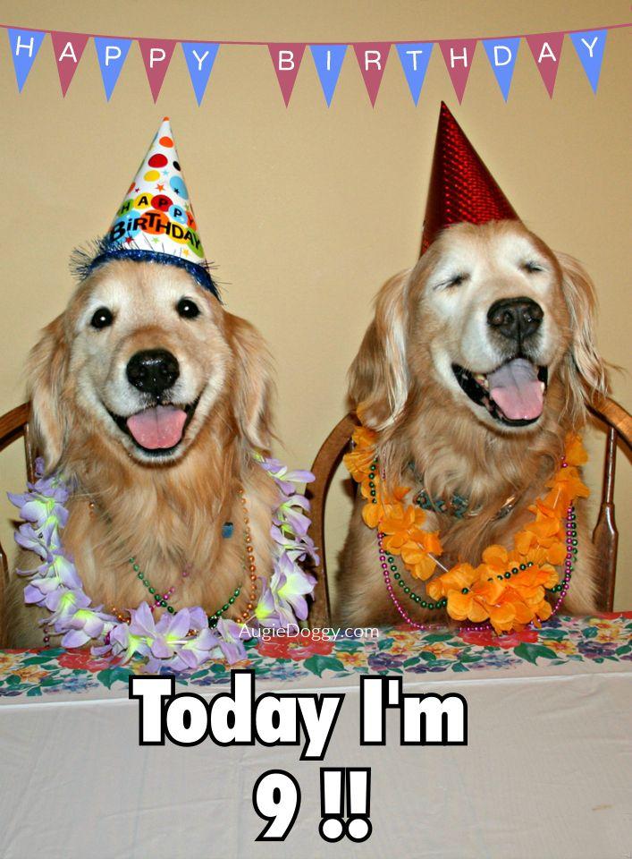 Australian Birthday Wishes Dogs
