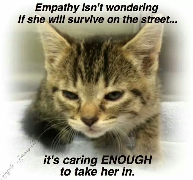 Quotes About Shelter Sad Pets