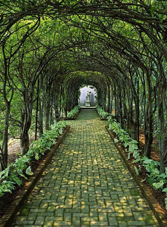 Pleached Allee Glen Burnie Historic Home Amp Gardens Ron