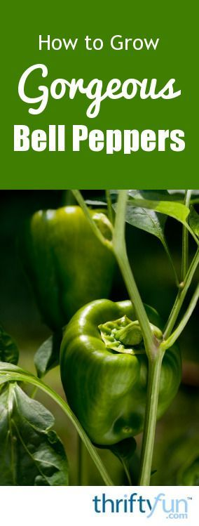 Led Grow Lights Peppers