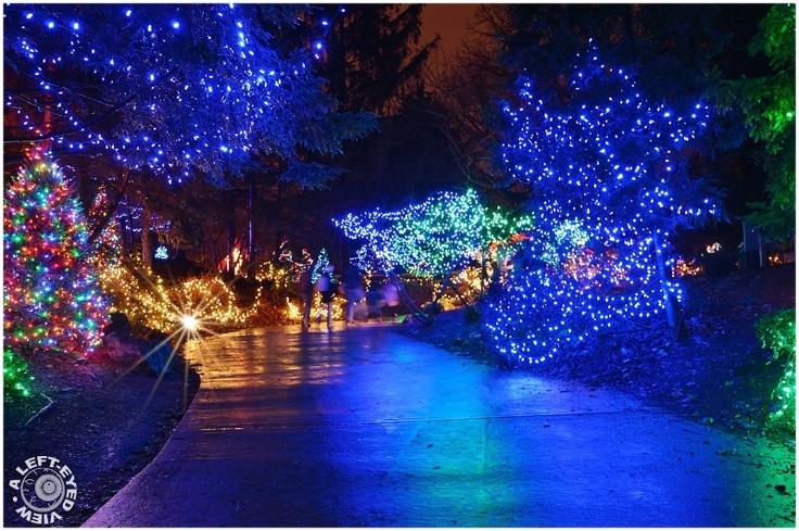 Brookfield Zoo Christmas Lights