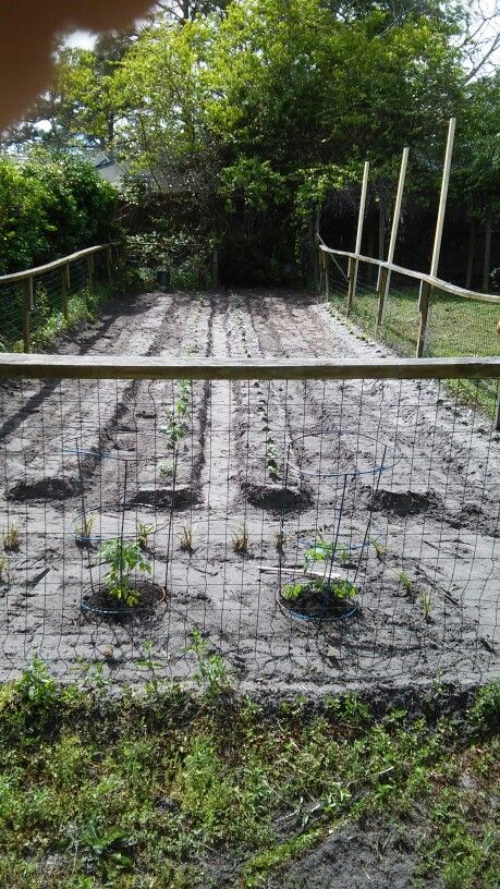 Pictures Vegetable Gardens