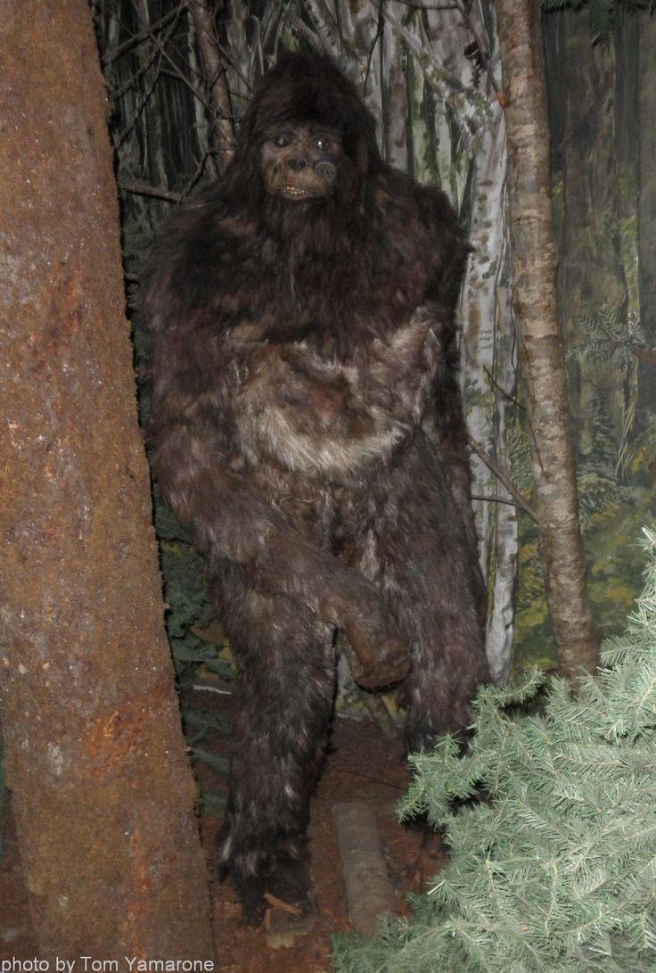 Bigfoot Sightings Lake Tahoe