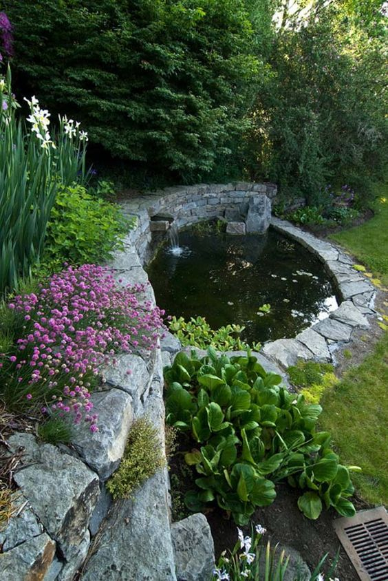 Best Fish Backyard Pond