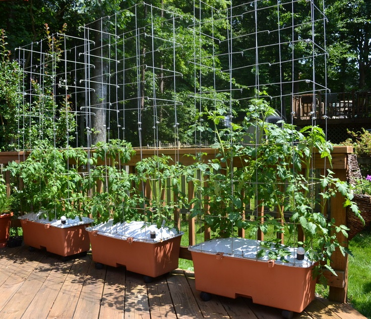 Earthbox Vegetable Garden