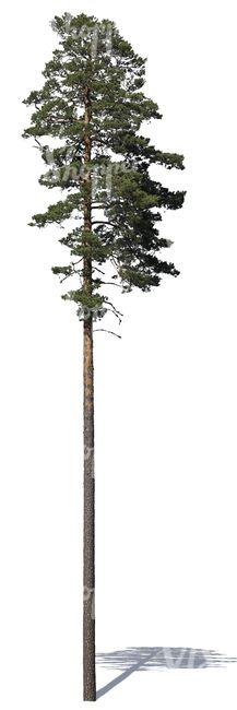 Cut Out Headboard Pine Tree