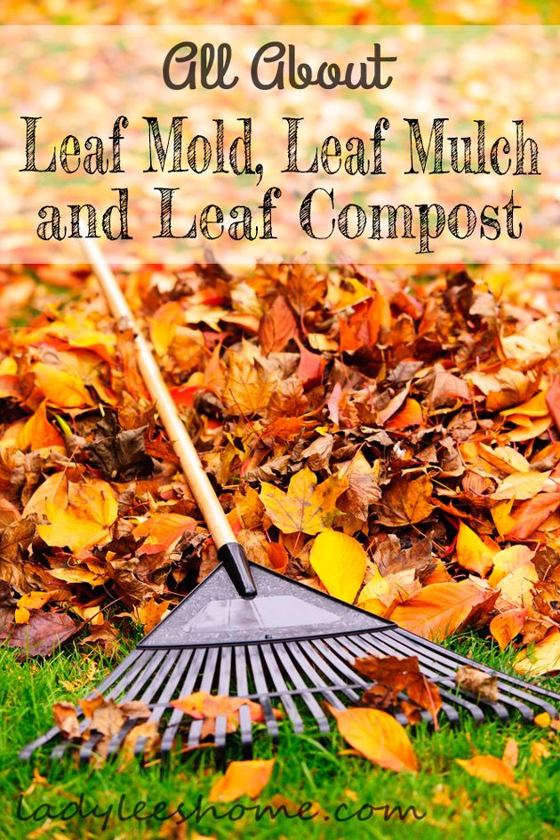 How Clean Leaves Out Mulch