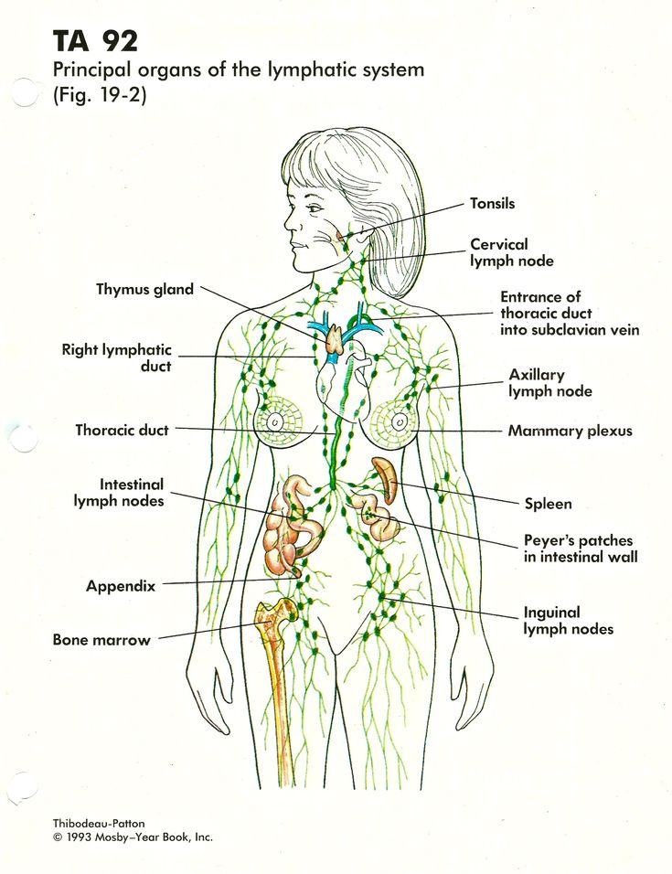 Chart That Relates The Lymphatic System Diagram