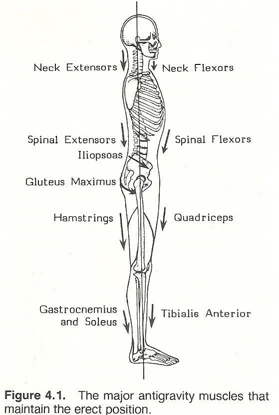 Skin Assessment Body Diagram Form