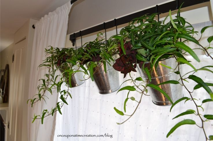 Best Indoor Hanging House Plants