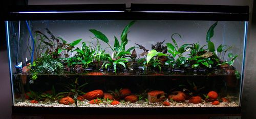 Indoor Floating Water Plants