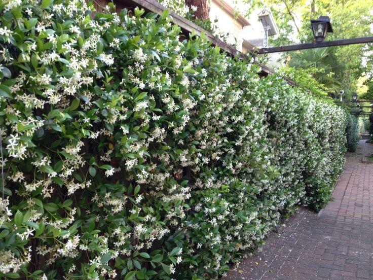 Narrow Garden Sheds