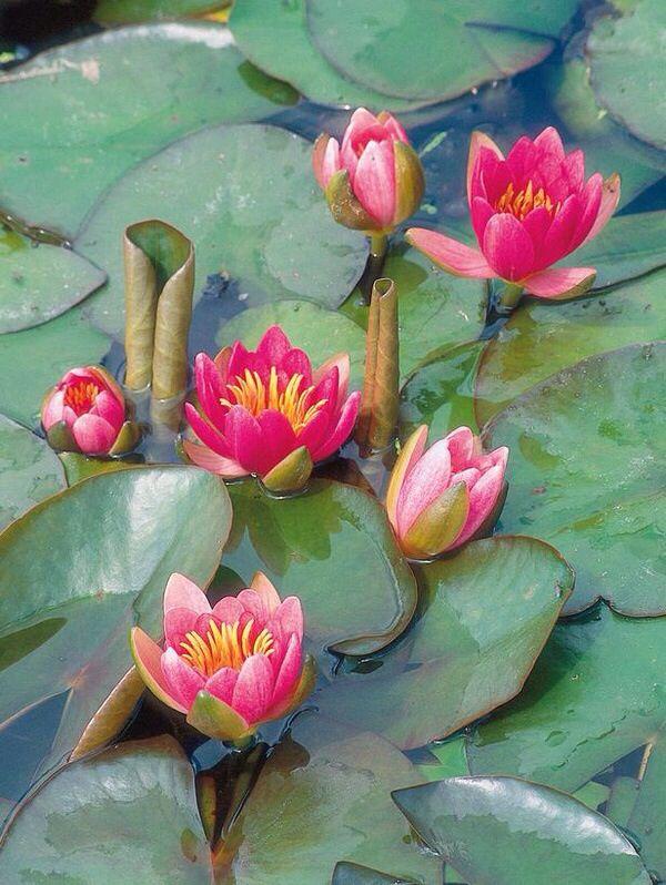 Good Plants Around Ponds