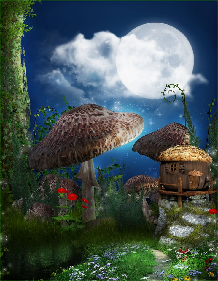 Alice And Wonderland Mushroom Land