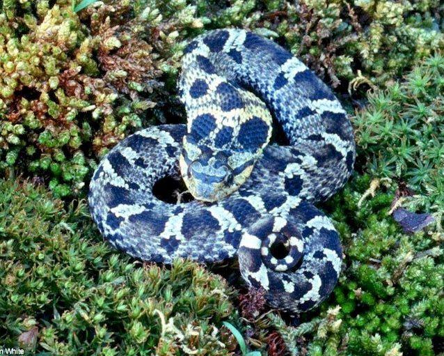 Non Snakes New Poisonous York