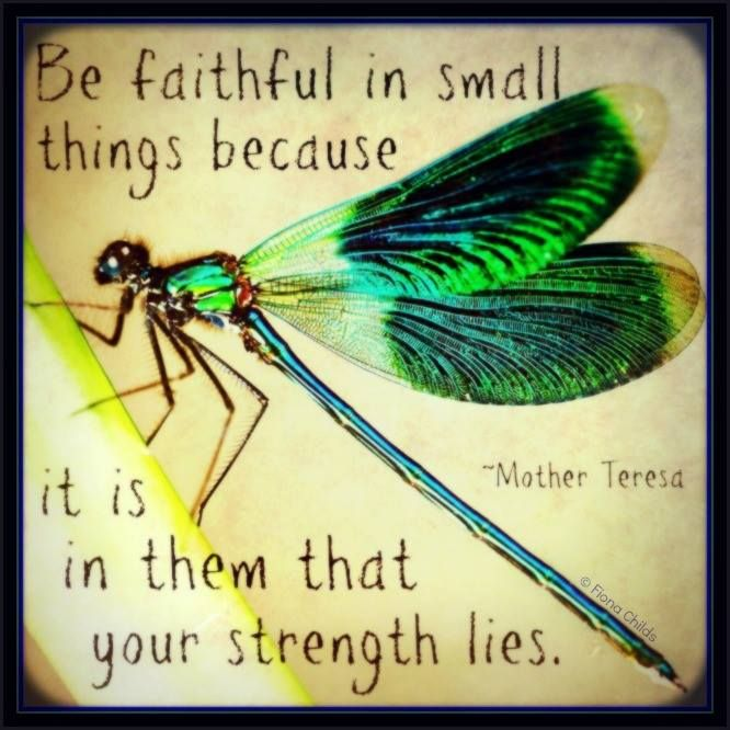 About Dragonflies Sayings