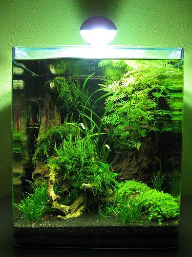 Best 25+ Nano aquarium ideas on Pinterest | Freshwater ...