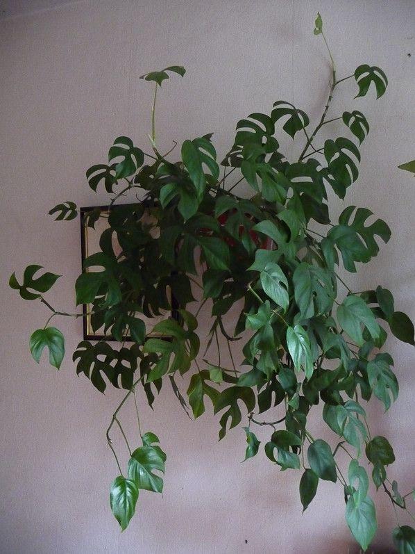 Plants Hanging Indoor Best Baskets