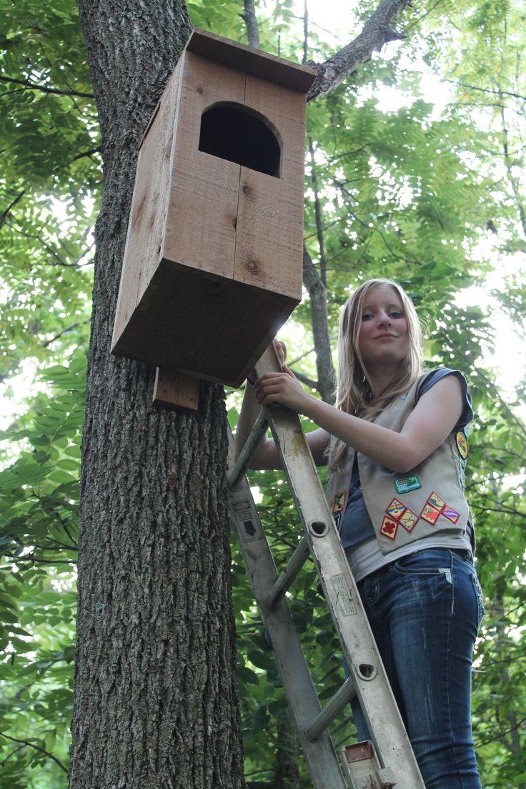 25+ best ideas about Owl House on Pinterest | Owl box ...